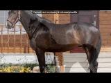 «Наши лошадки» под музыку из К/Ф Девушка и Гранд - наша дружба. Picrolla